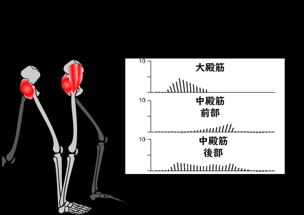 殿 作用 中 筋 新人のあなたへ!中殿筋の機能解剖と触診方法